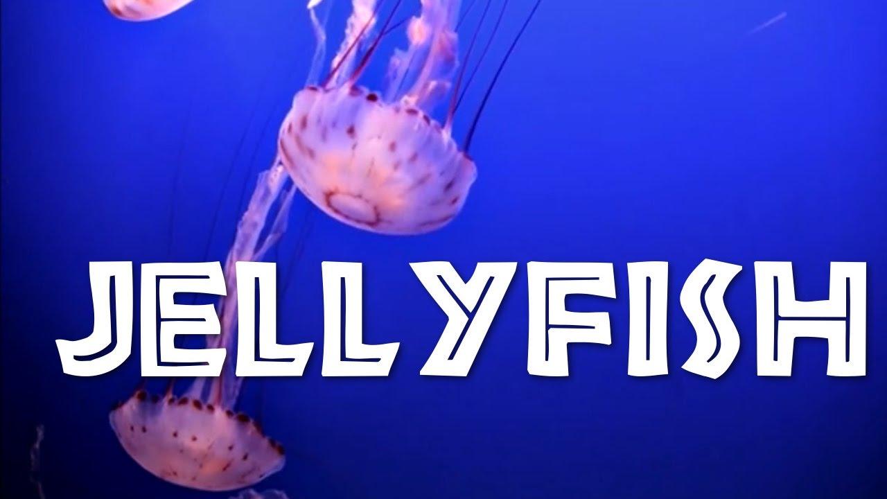 All About Jellyfish For Kids Jellyfish For Children Freeschool Medium