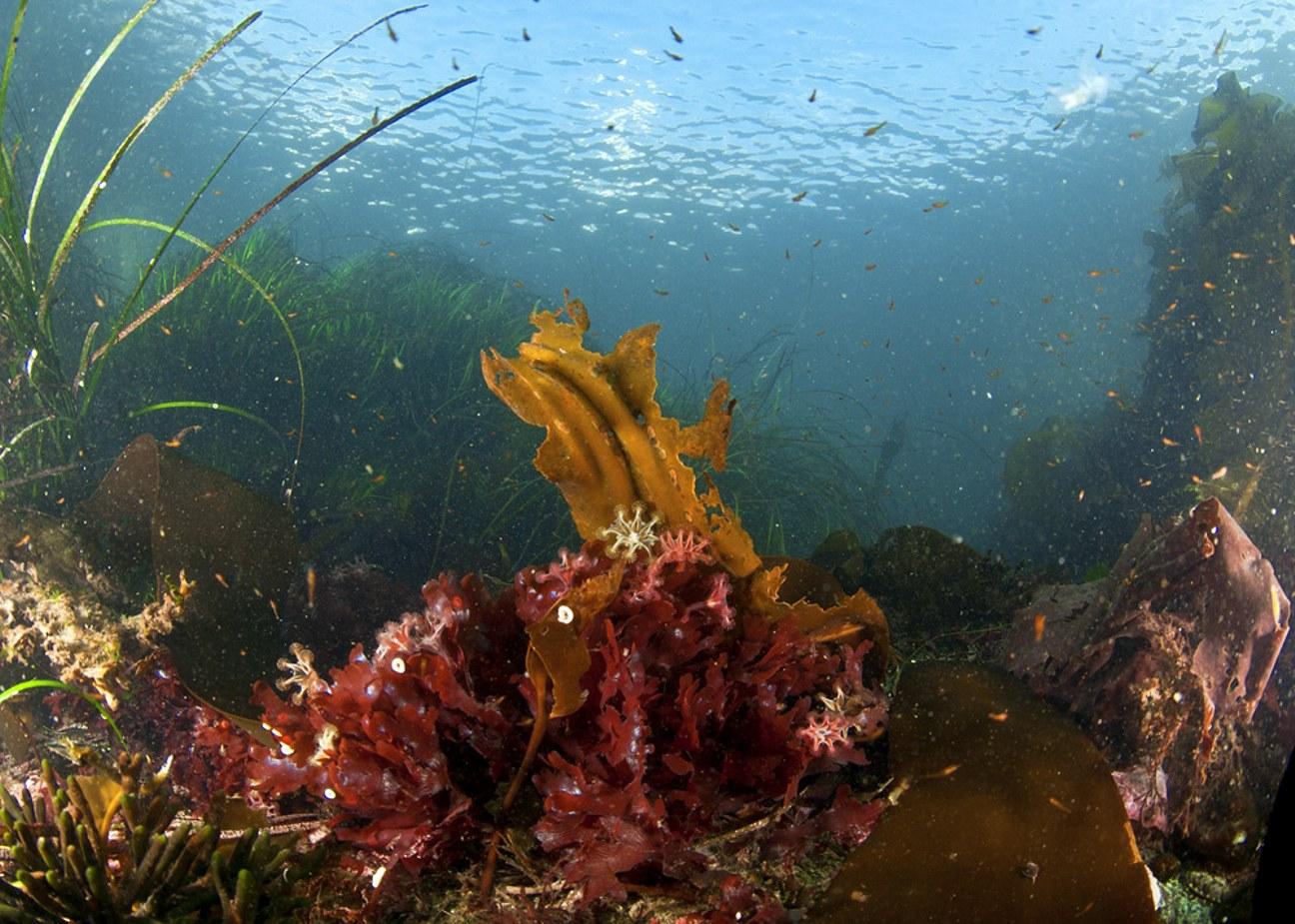 Box Jellyfish Habitat Tropical And Subtropical Waters Medium