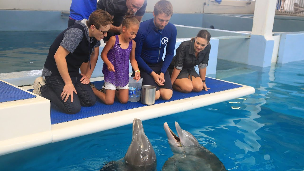 Buy Dolphin Tale 2: A Tale of Winter and Hope by Gabrielle Reyes ... | 720x1280